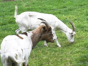 Tiere beim Bauernhofurlaub